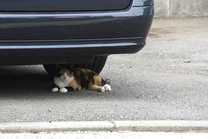 下回り検査で車を揺らすときに検査官がチェックしている箇所とは?